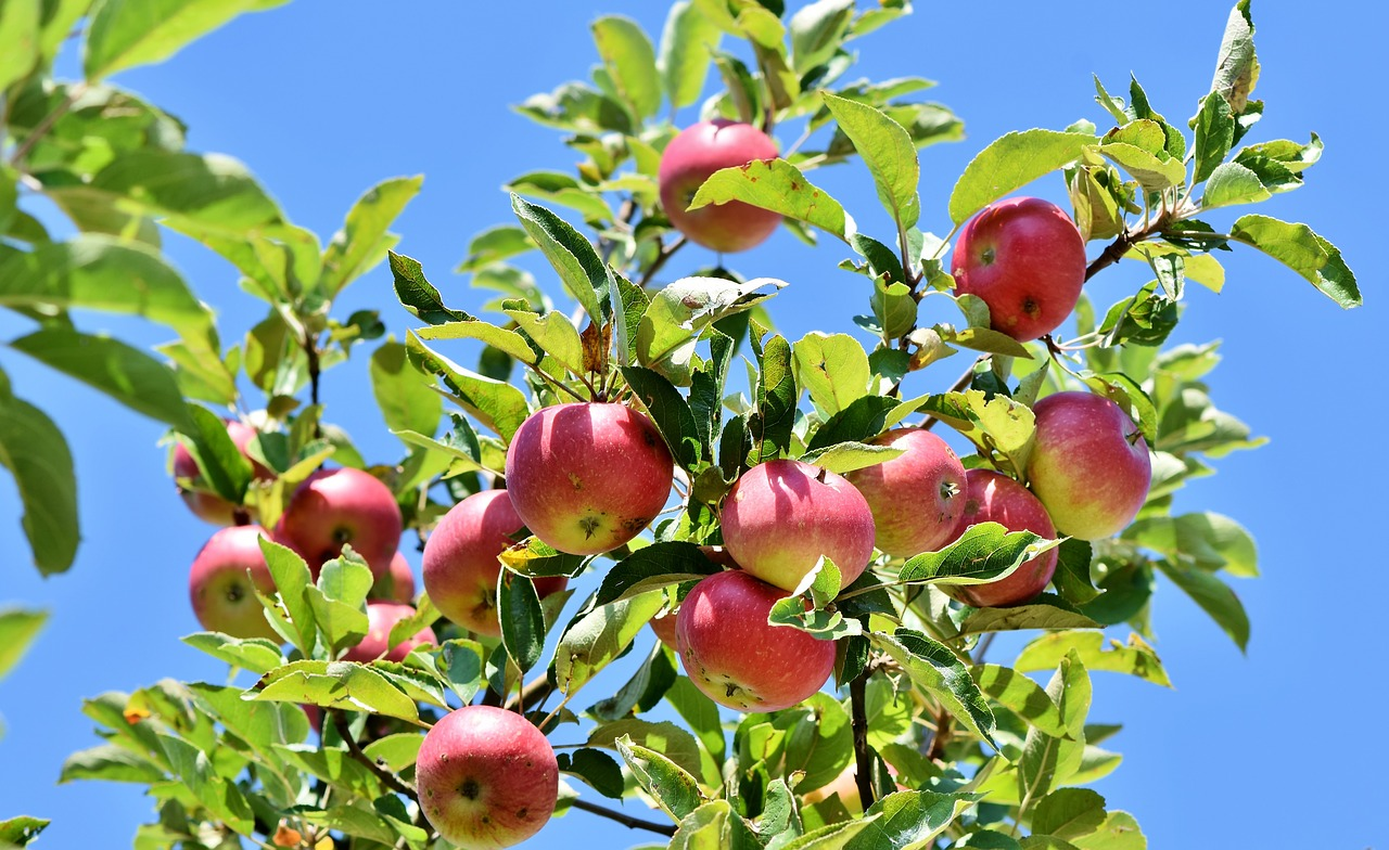 pomme pixabay.jpg
